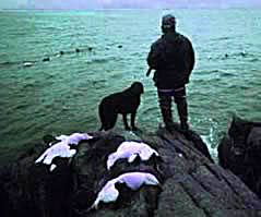 Sea Duck Hunting Guides Hunt Maine Sea Ducks With Guides